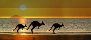 Kangaroo là biểu tượng của nước Úc